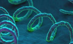 Бледная спирохета как возбудитель сифилиса